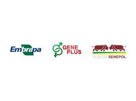 Programa Embrapa/Geneplus avalia e identifica os melhores touros da raça Senepol