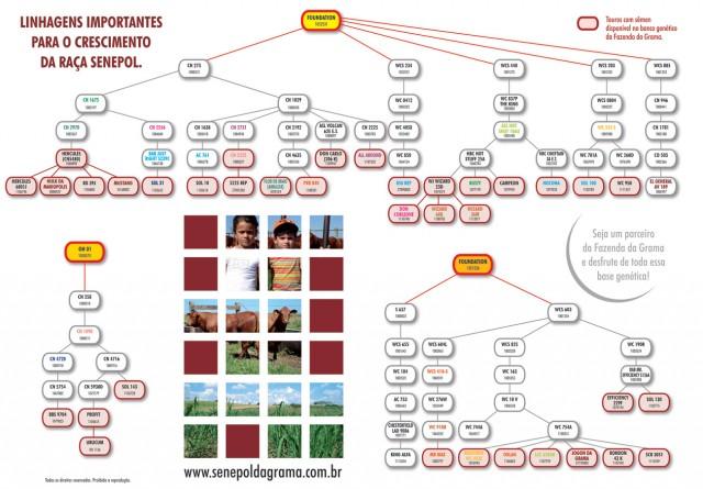 arvoregenealogicafazendadagrama-grande