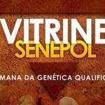 Folder da Vitrine Senepol: a semana da genética qualificada do Senepol