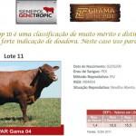 Leilão Parceiros do Senepol 2011: Destaques de GPAR Gama 04
