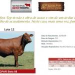 Leilão Parceiros do Senepol 2011: Destaques de GPAR Beta 08