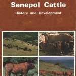 Senepol – Cattle