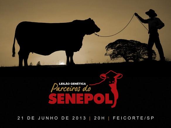 Leilão Genética Parceiros do Senepol – Feicorte 2013