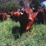 De frente com as Safiras – Visita foi na fazenda da GRAMA
