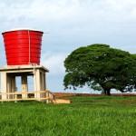 Safiras está com 214 bezerras e  mede agora consumo de água
