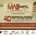Primeiro leilão MAC Senepol em parceria com a GRAMA Senepol vendendo 40 touros