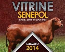 Vitrine do Senepol agora tem um mês de grandes negócios