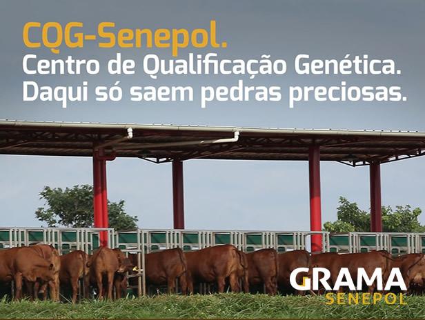 CQG-Senepol incorpora novo técnico do Geneplus-Embrapa