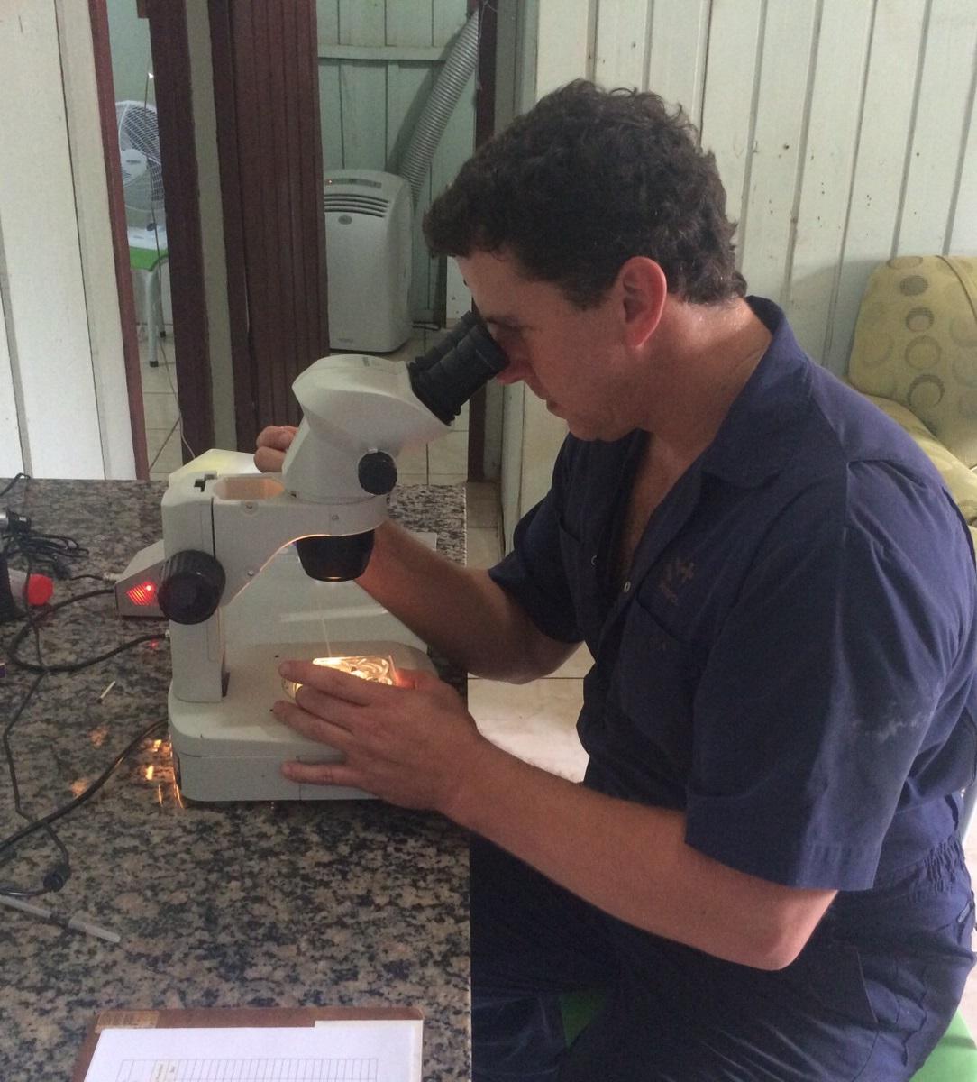 Técnico Luciano Aranha, da S+, presta assistência com os embriões da parceria  BoiRodrigues/Grama na Fazenda Harmonia.