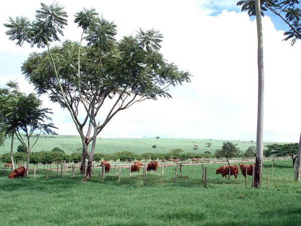 Fazenda da Grama - Pirajuí - SP