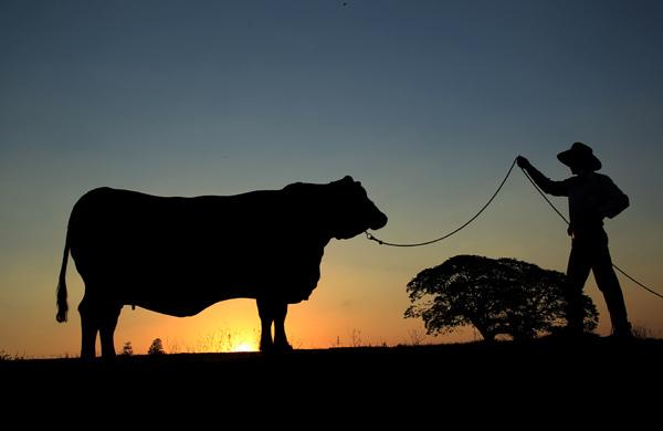 Fazenda da Grama