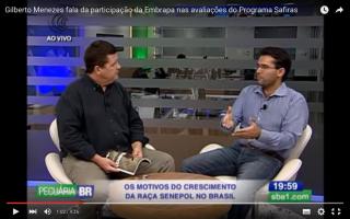 Embrapa enaltece no Canal do Boi  parceria com o Safiras do Senepol