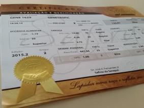 Safiras do Senepol revela  6 novas doadoras campeãs