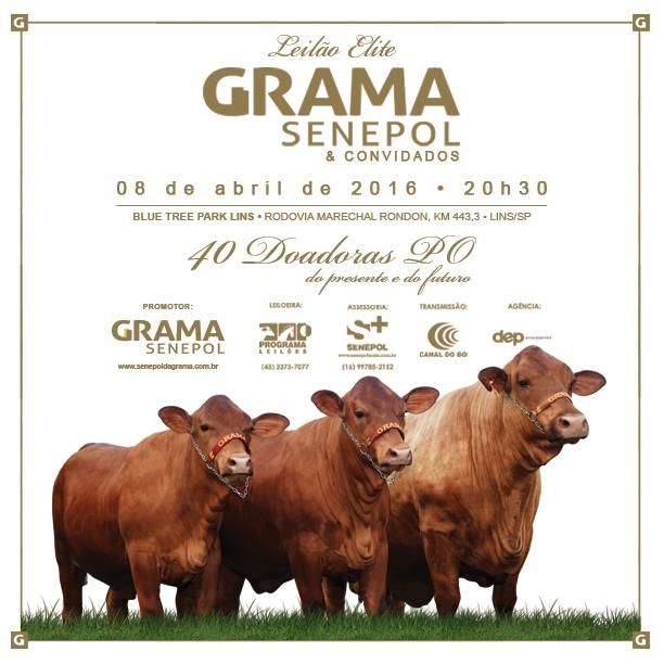 Leilão Grama Senepol 2016