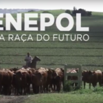Senepol – A raça do futuro estreia no Canal Rural