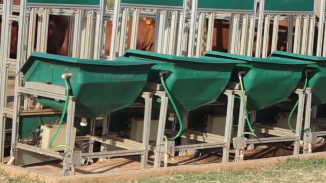 Tecnologia dos cochos eletrônicos evita manejo e promove pesagens diárias e voluntárias dos animais.