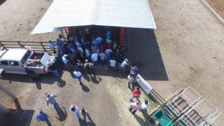 Criadores se reúnem na Fazenda da Grama para conhecer instalações da prova e as novas Safiras do Senepol.