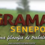 Balanço Leilão Topázio 2019