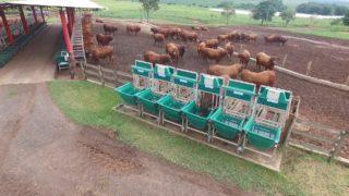 Grama Senepol foi pioneira na medição de eficiência alimentar pela Intergado
