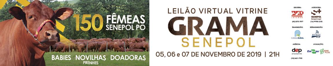 Leilão Virtual Vitrine Grama Senepol 2019