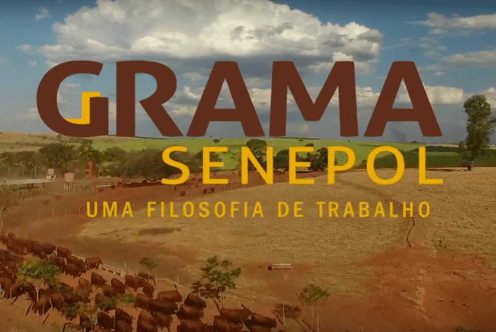 Grama Senepol – 20 Anos de História com a raça Senepol