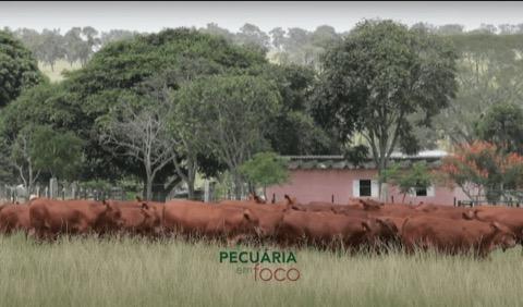 Pecuária em Foco – Fazenda Morada do Sol