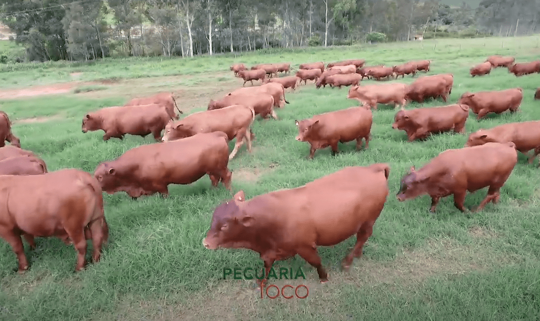 Pecuária em Foco – Uma Filosofia de trabalho e prol do desenvolvimento da Pecuária