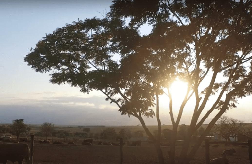 SENEPOL DA GRAMA – 20 Anos Senepol