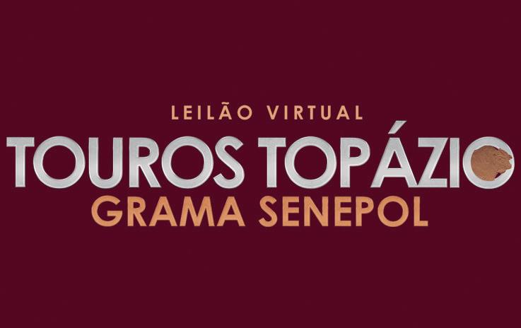 Leilão Virtual Touros Topázio Grama Senepol 2020
