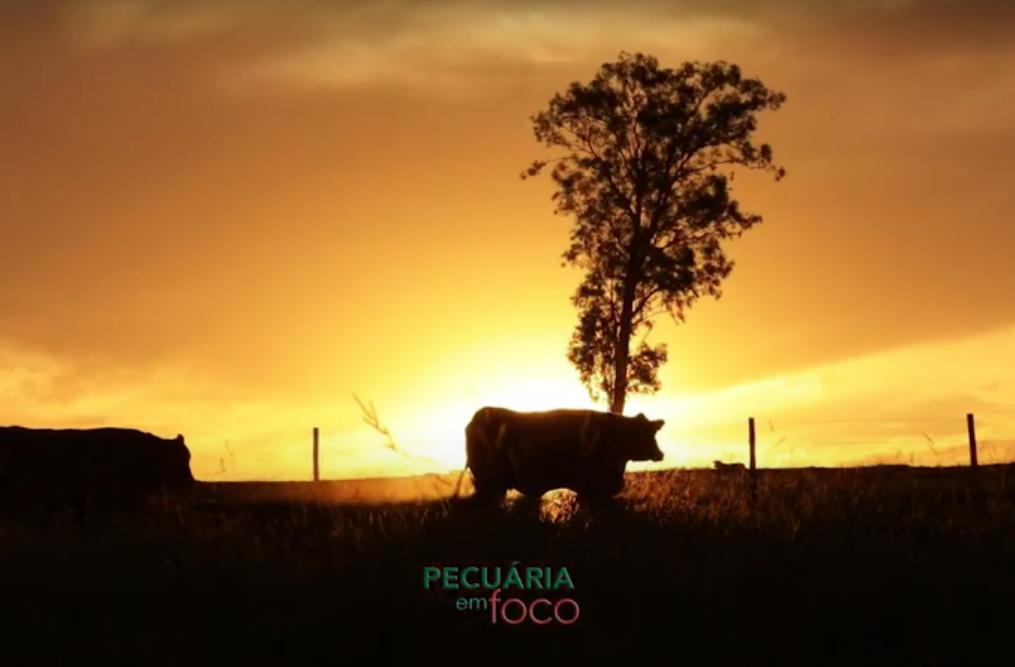 Senepol da Grama – Parte 1 – Pecuária em Foco 2021