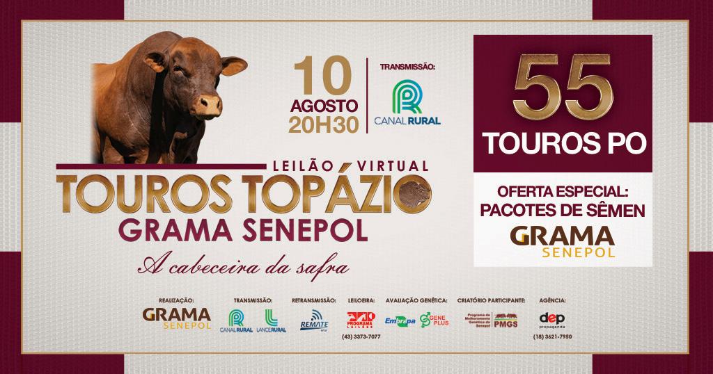 Leilão Touros Topázio Grama Senepol 2021