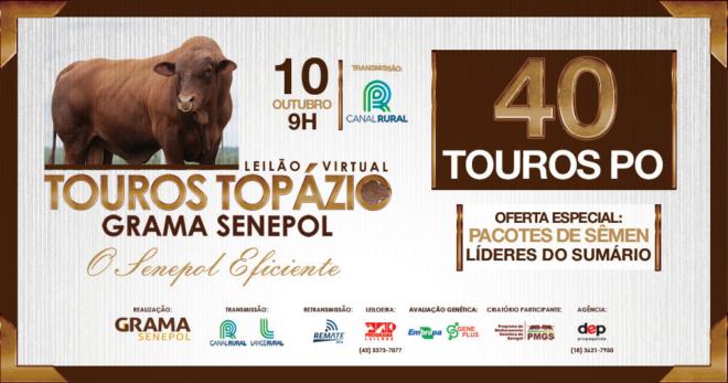 Grama Senepol vende 40 touros Topázio dia 10/10, às 9h, pelo Canal Rural